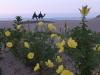 宵待草の浜